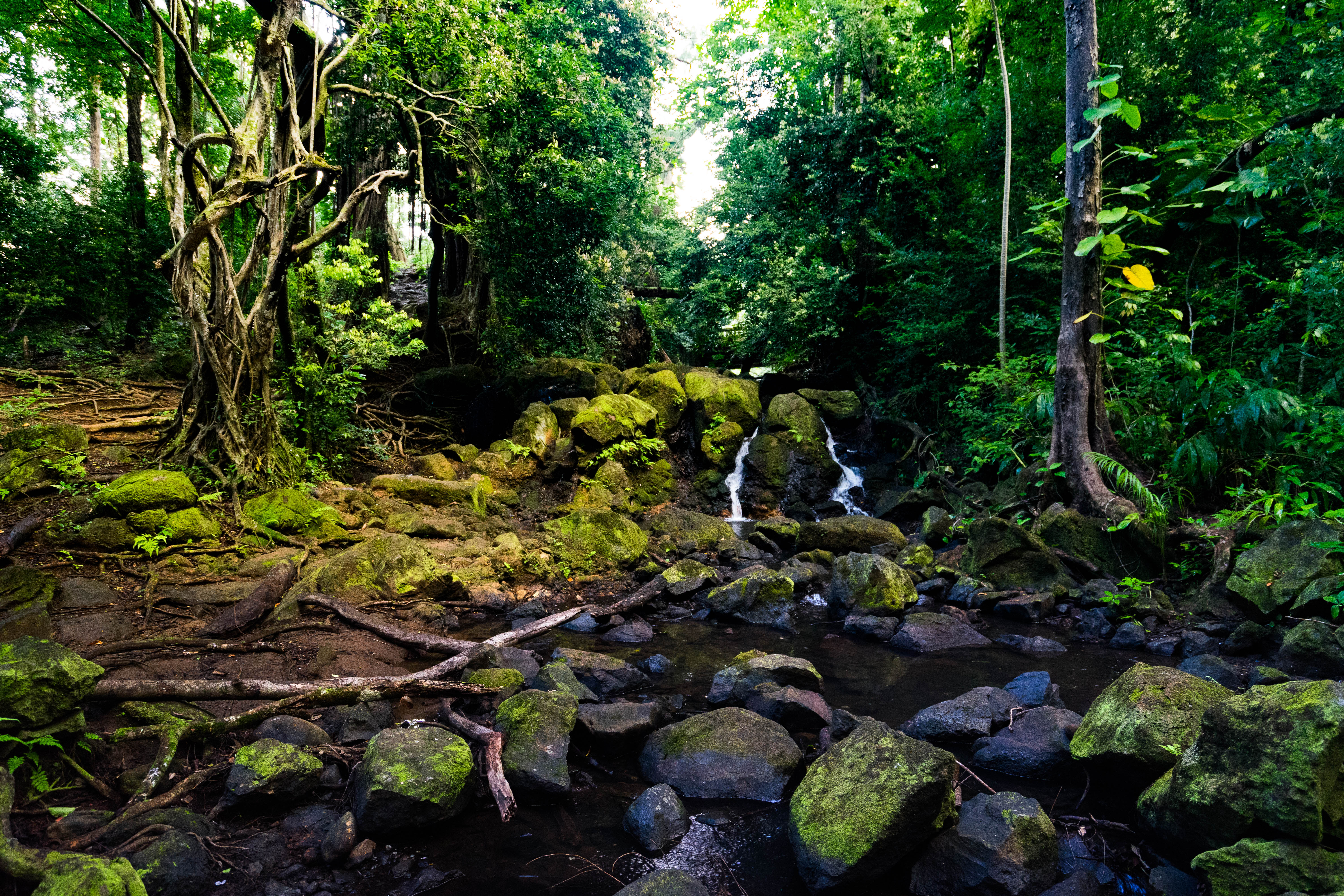 Best Waterfall Hikes On Oahu