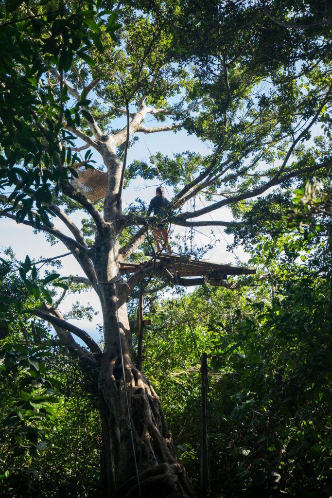 tantalus treehouse oahu