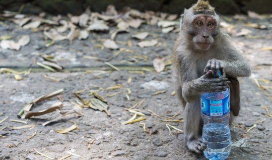 monkey forest bali, ubud bali monkey forest,monkey forest bali cost,ubud monkey forest bali ,sacred monkey forest bali ,bali ubud monkey forest ,monkey forest bali ubud,bali monkey forest ubud,monkey forest bali entrance fee