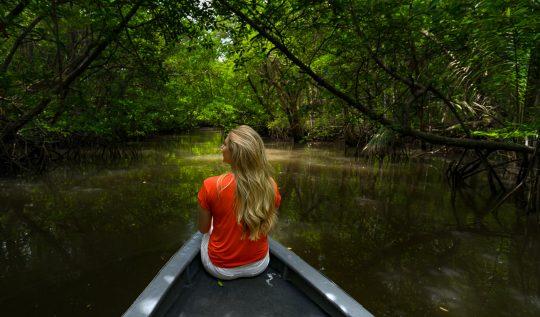 bintan mangrove tour, bintan island, mangrove tour bintan, monkey bintan, boat tour bintan