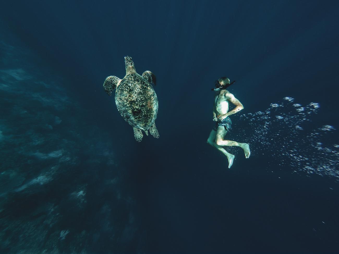 Balicasag Island Virgin Island Bohol on Sea Turtle