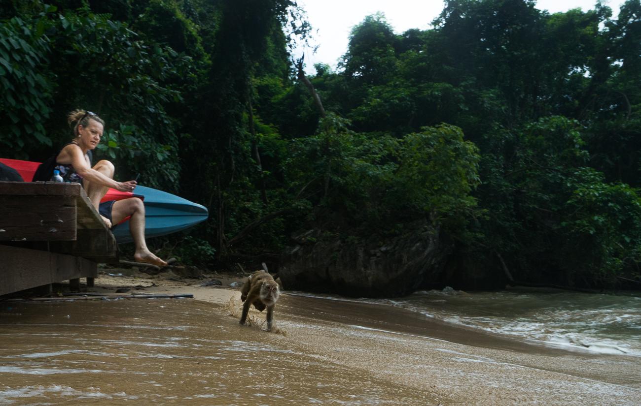 ao nang beach monkey
