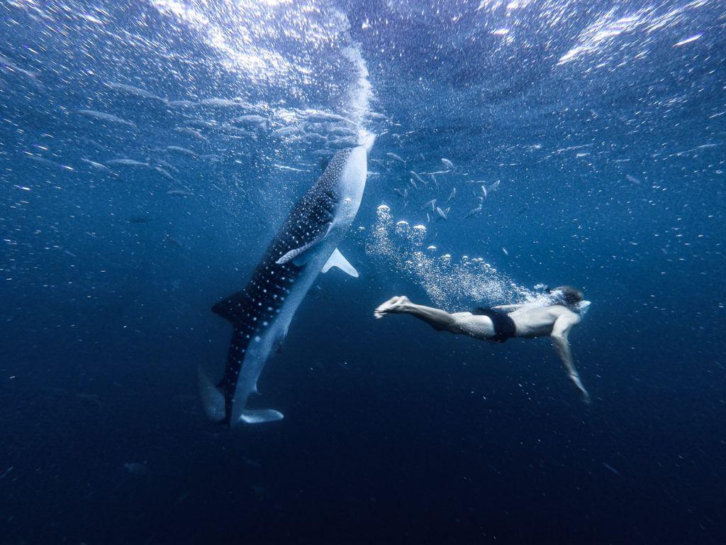 oslob-whale-shark-0712320