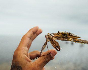 http://www.pir.sa.gov.au/fishing/fishing_limits