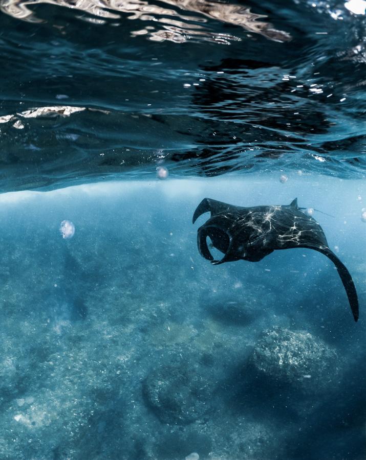 manta ray, manta ray bali, manta bay snorkeling, manta bay bali, manta bay nusa penida, manta bay nusa lembongan,