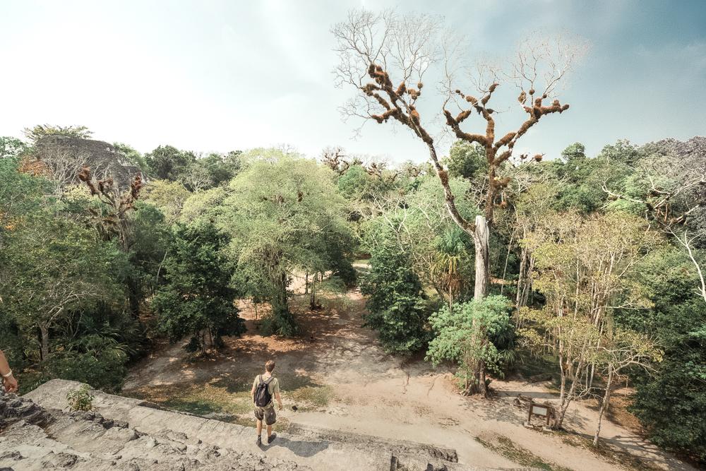 TIKAL, tikal guatemala, tikal RUINS, tikal national park, guatemala tikal, tikal mayans, tikal temple, tikal maya,maya tikal
