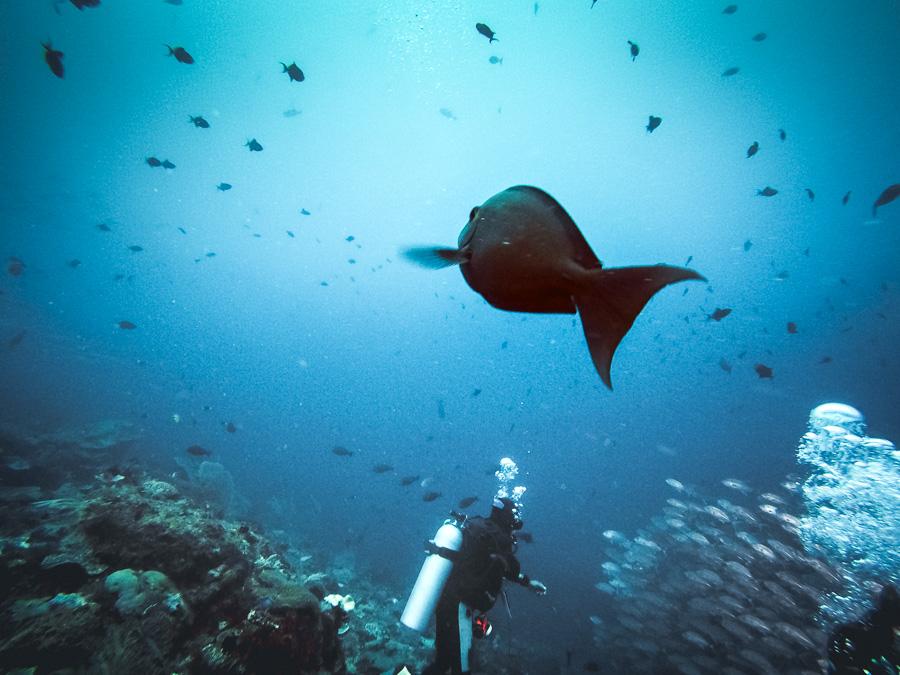 Komodo Island Diving Review