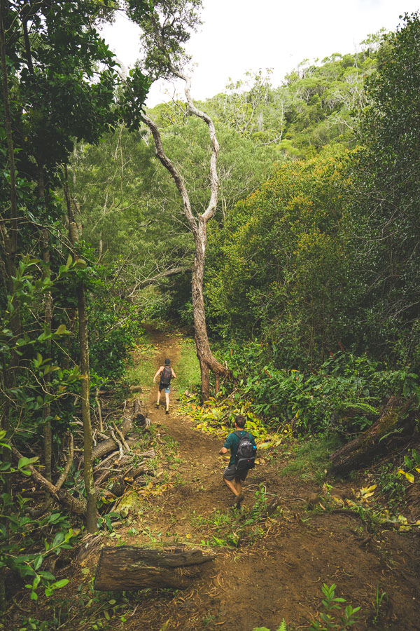 nualolo trail, nualolo kai, nualolo cliff trail, nualolo trail kauai, nualolo awaawapuhi loop trail, nualolo valley, nualolo cliff trail closed, nualolo ridge hike,