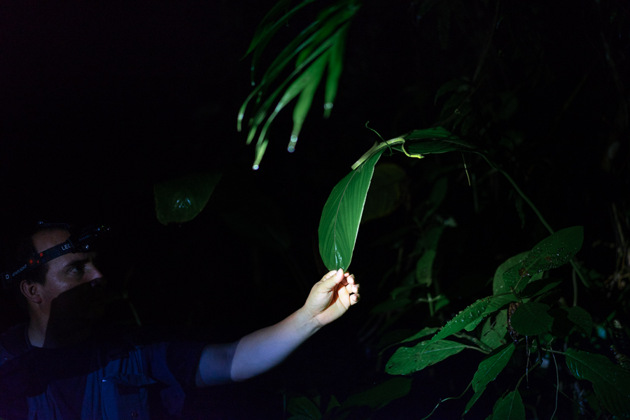 night trail nature santa fe veraguas