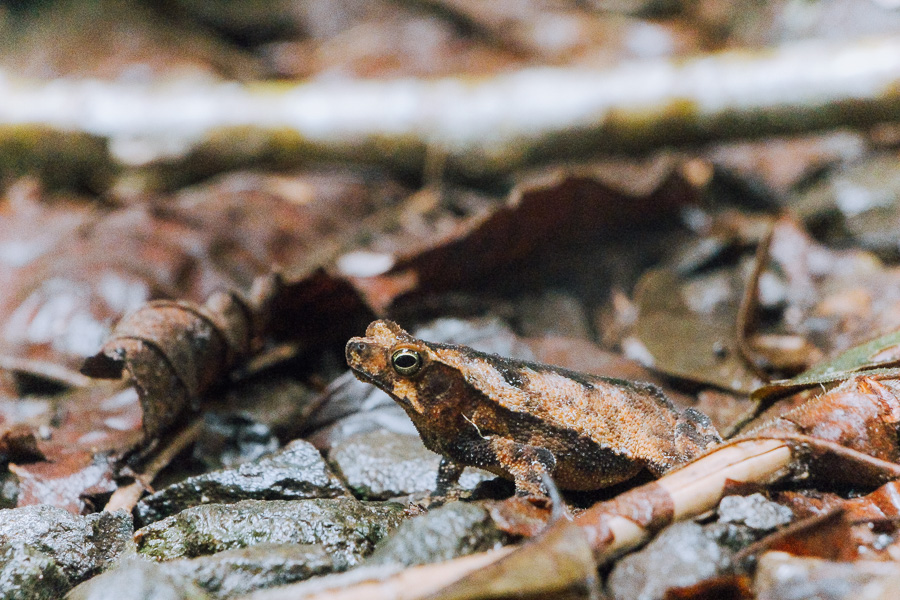 plantation walk in soberania national park